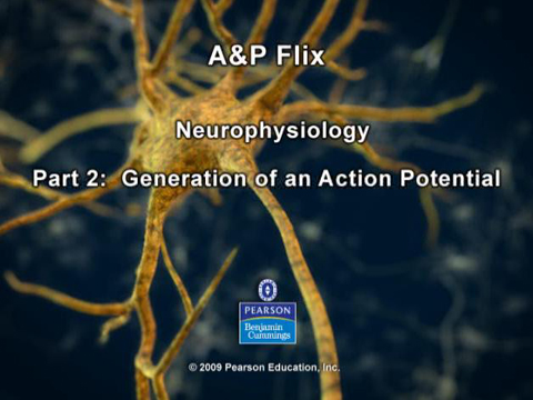 Screenshot of Generation of an Action Potential animation