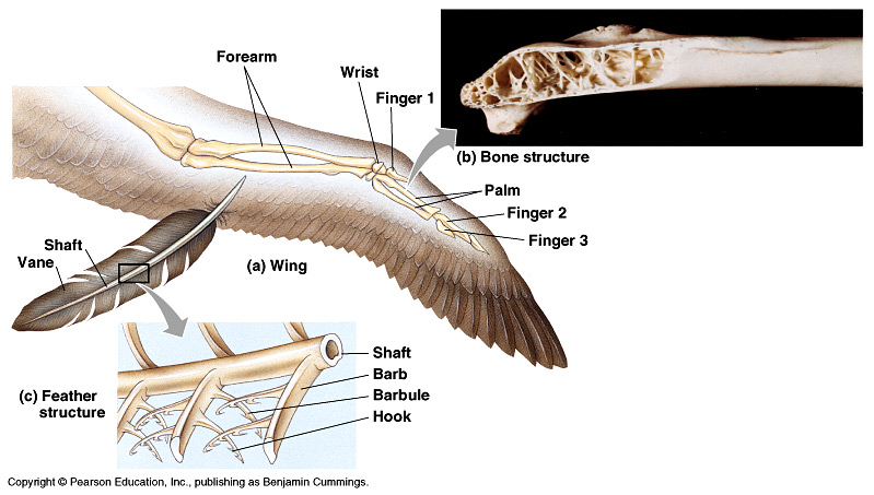 Anatomy of a Bird