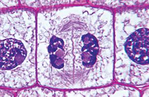 Figure_08-07B.jpg